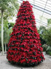 Árvore Natal Viva