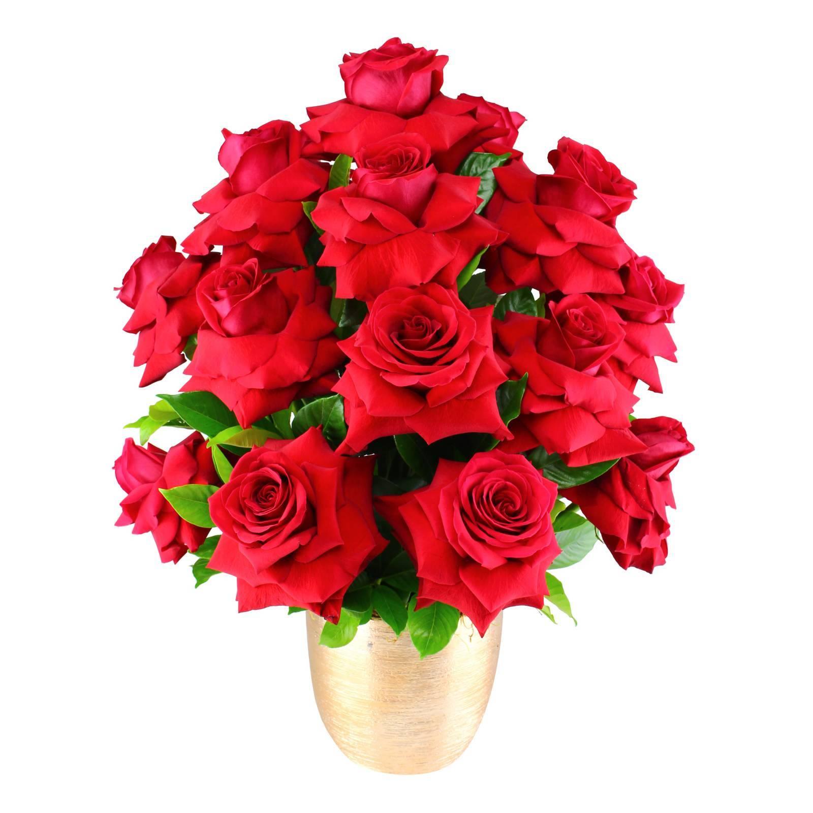 Elegância de Rosas