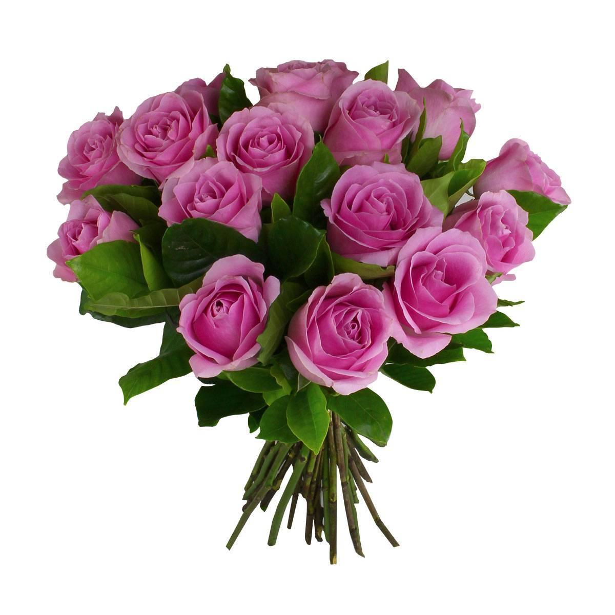 15 Rosas