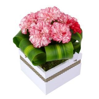 Elegância de Cravos | Florisbella Floricultura