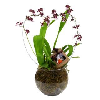 Orquidea Chocolate no Vidro. | Florisbella Floricultura