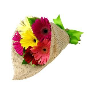 Colorido de Gerbera | Florisbella Floricultura