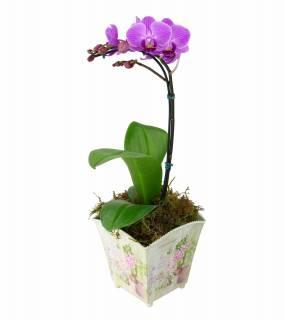 Delicadeza | Florisbella Floricultura