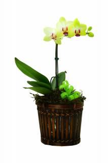 Encantadora | Florisbella Floricultura